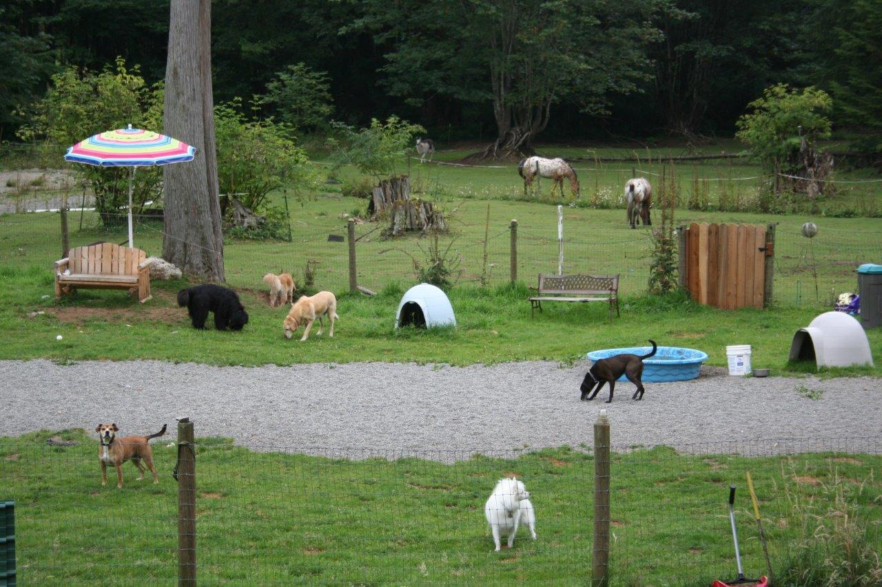 Mystic mountain pet retreat loving dog boarding cat for What is dog boarding